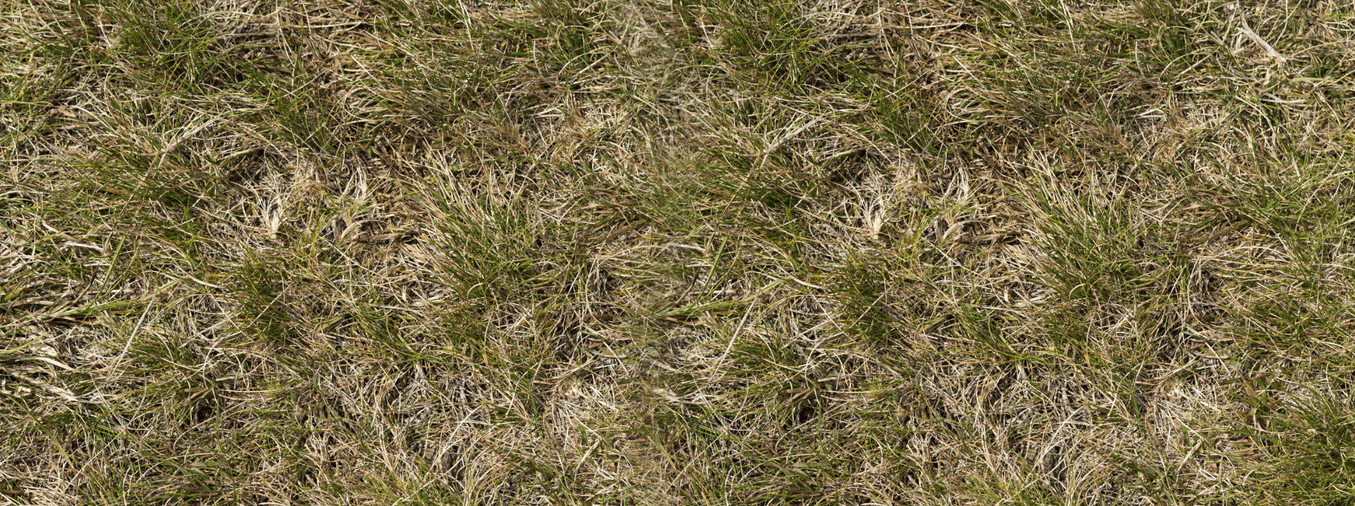 Bad grass 1