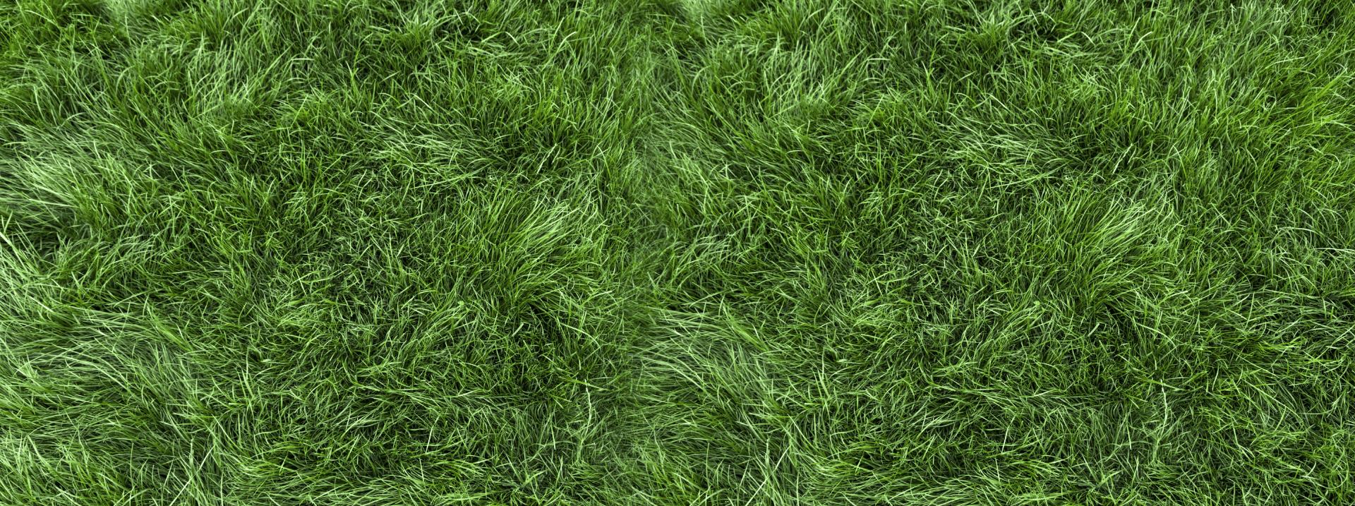 Good grass 1